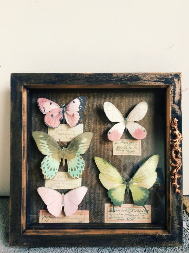 butterfly-specimen-box_39232341344_o
